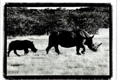 animalsinfield