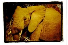 elephantclose