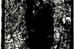 gorillababytree